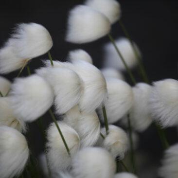 Artic Flowers